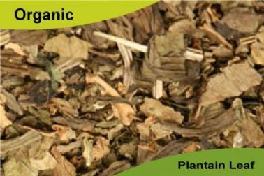 Organic Plantain Leaf 50gm